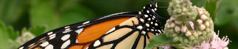 Welcome To Michigan Native Butterfly Farm