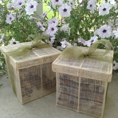36 Monarch Butterflies in 2 release boxes