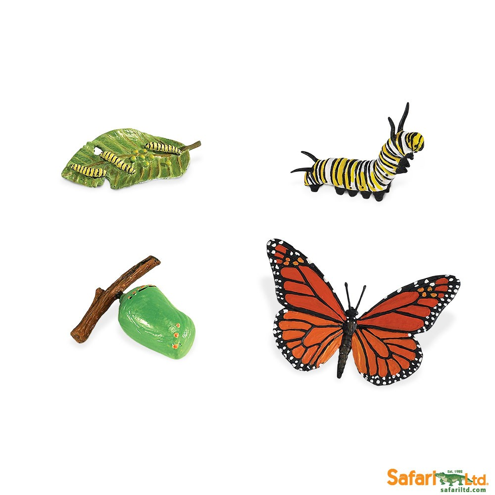 Life Cycle of a Monarch Butterfly Replica Set - Michigan Native ...