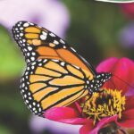 Butterflies of the Midwest Quick Guide