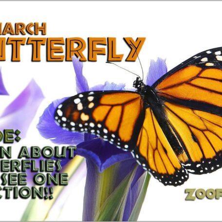 Butterfly Book - Flipbook 978-1934095164