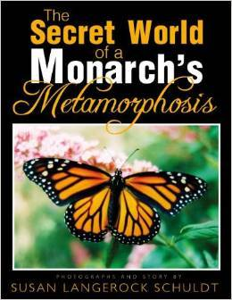 Butterfly Metamorphosis Book