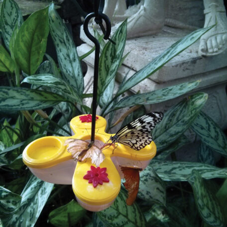 Butterfly Nectar and Fruit Feeder 88005_1