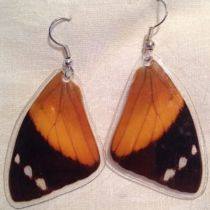 Butterfly Wing (Blomfild's Beauty, Smyrna blomfildia) Earrings 1
