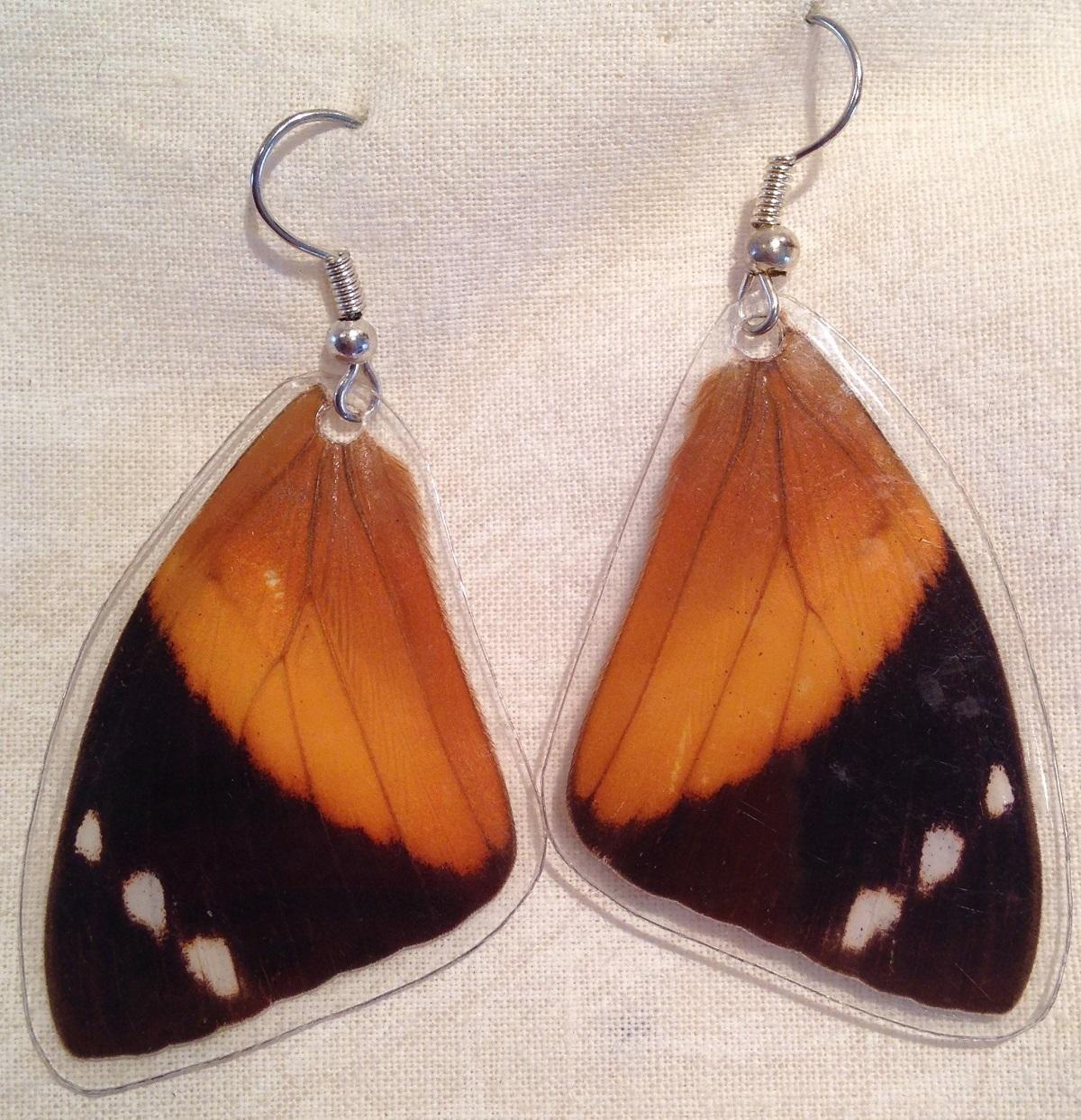 Butterfly Wing (blomfild's Beauty, Smyrna Blomfildia) Earrings 1