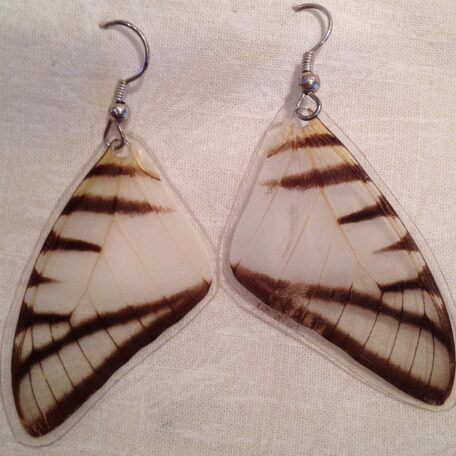 Butterfly Wing Eurytides agesilaus Earrings