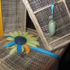 Butterfly Wish Box - Real Butterfly Pupa