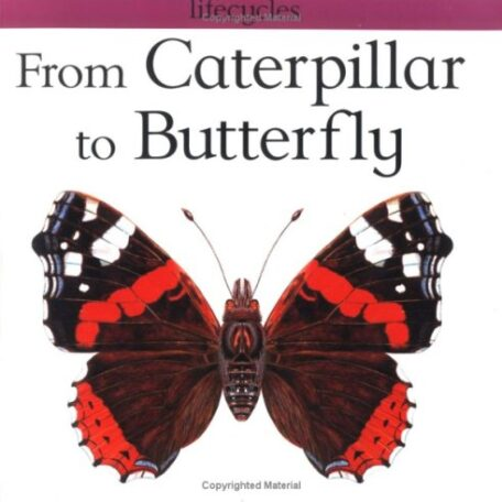 From Caterpillar To Butterfly Book - Red Admiral Butterfly Life Cycle