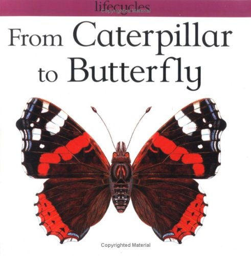 From Caterpillar To Butterfly Book Red Admiral Butterfly