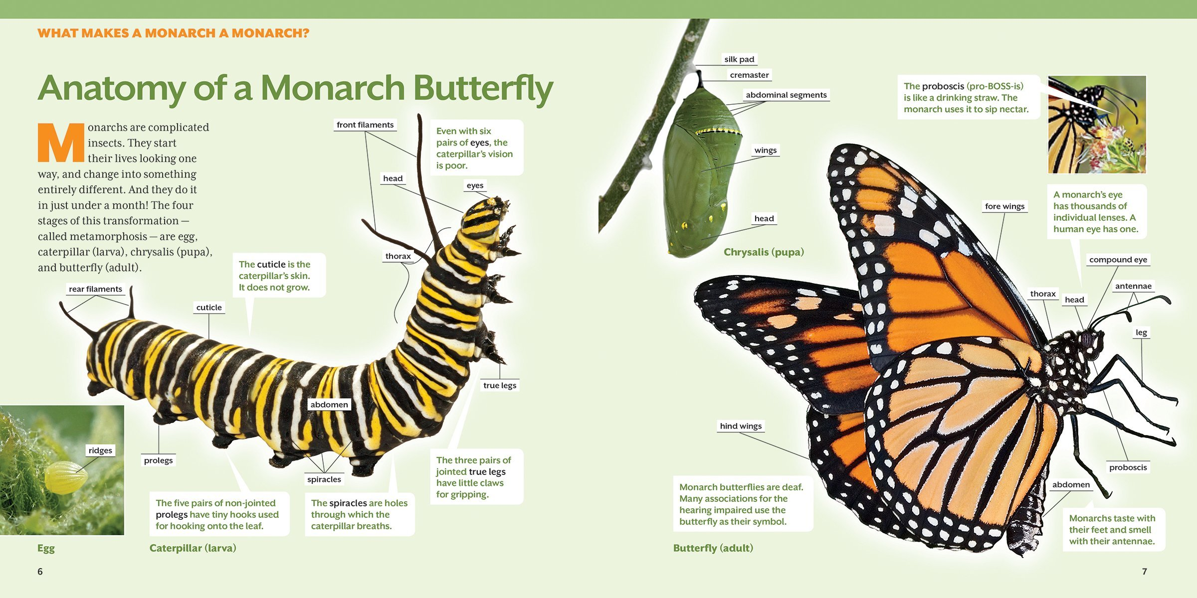 How To Raise Monarch Butterflies Book Step By Step Guide