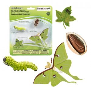 Life Cycle of a Luna Moth Replica Set 663516
