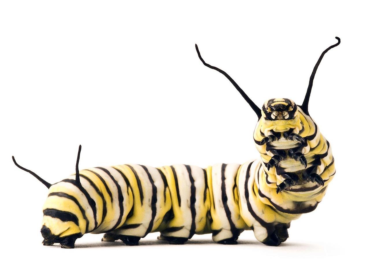 Indoor Outdoor House Monarch Caterpillar Jewelry Bead Michigan Native