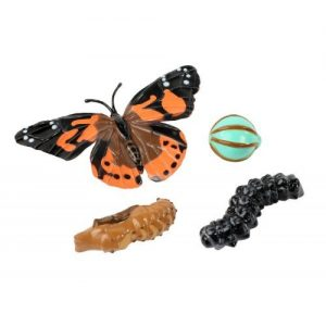 Painted Lady Butterfly Lifecycle Stages Replica Set 4760
